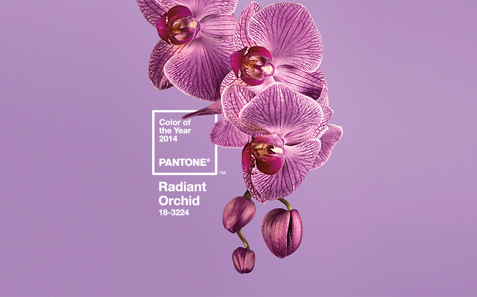 Radiant Orchid, Pantone color 18-3224, the firm's 'Color of the Year' for 2014. | Image courtesy of Pantone.