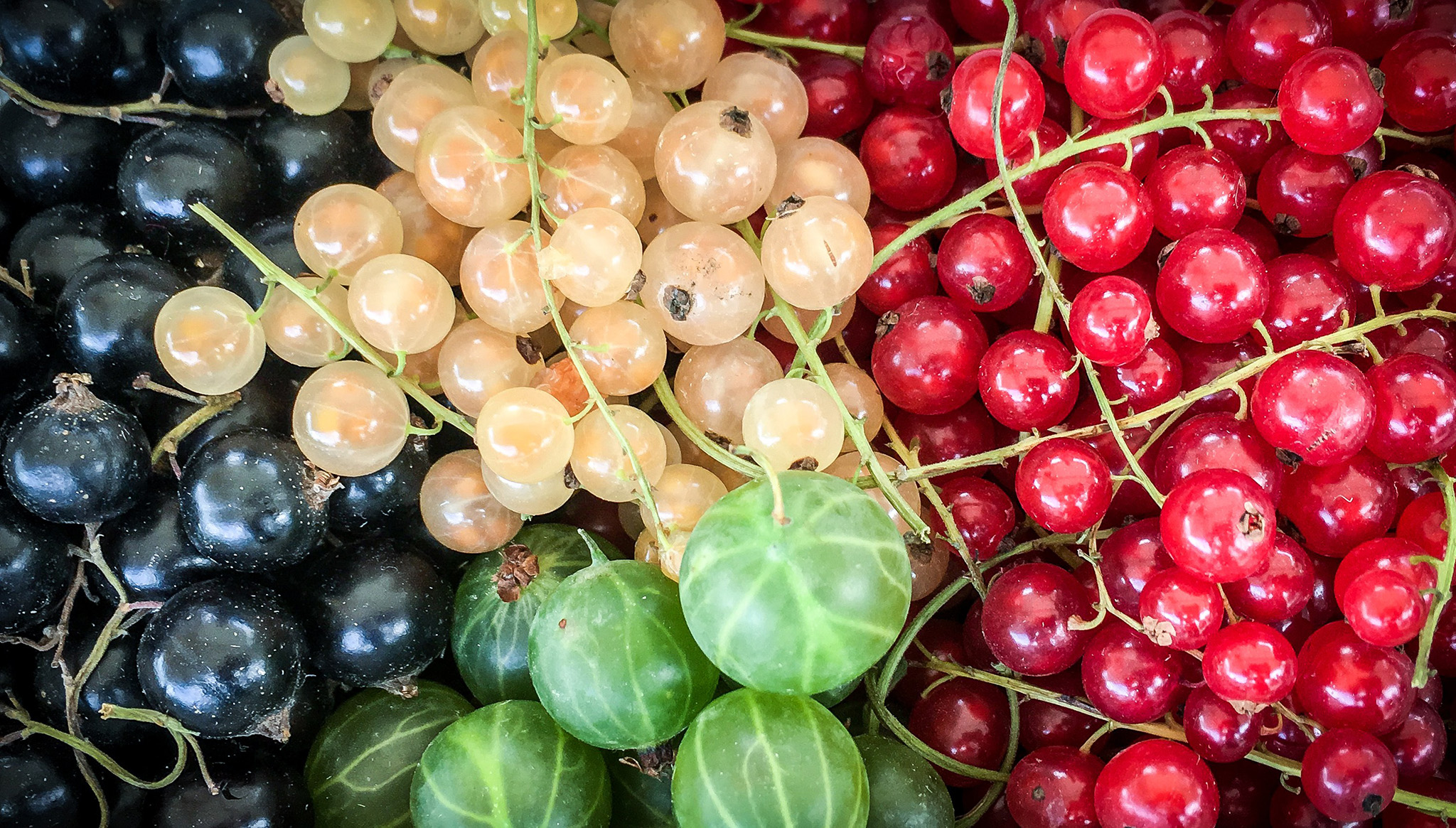 (K)not to be pedantic but which of these berries - let alone other unshown variants - represent the colour berry? | Image via BerlinPhotograph.